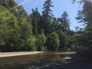 Navarro River Trees April 2015